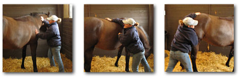 pictures of equine massage